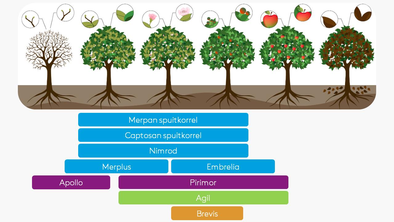 Fruits portfolio-1